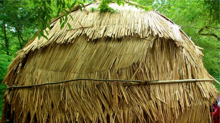 cattail woven weave hut building material for native americans