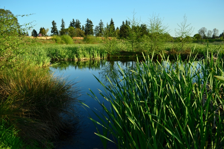 Simpson Park Marsh, Albany Oregon