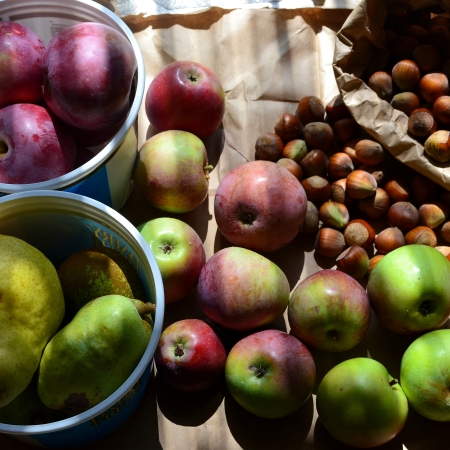 urban foraging the northwest forager apples pears hazelnuts