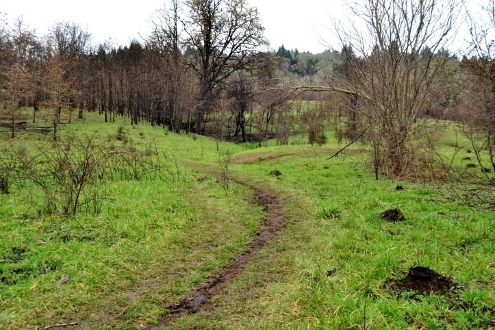 timberhill natural area trails corvallis oregon