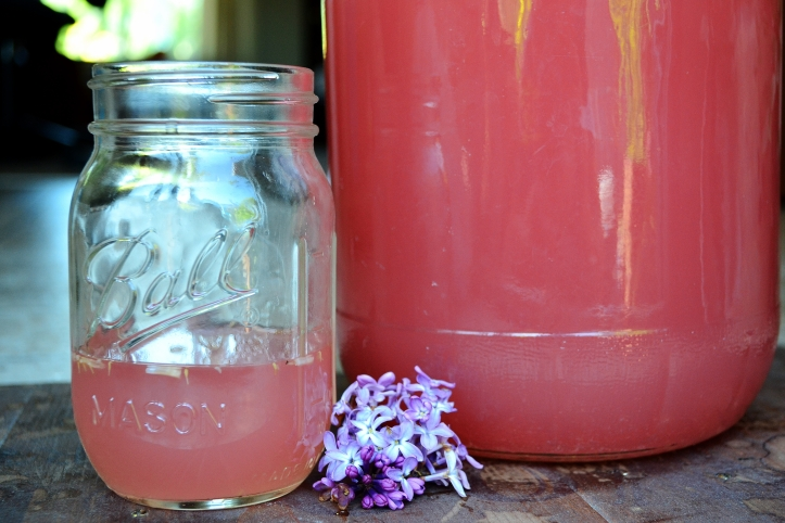 Once I read a lilac wine recipe in a foraging book, I knew right then and there I had to try this!