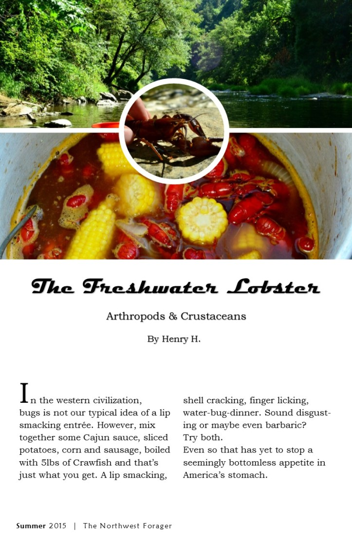 the freshwater lobster by the northwest forager