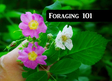 Foraging 101 The Northwest Forager.