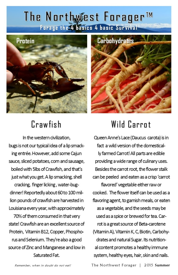 the 4 basics by the northwest forager