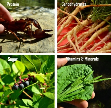 the 4 basics by the northwest forager featured image