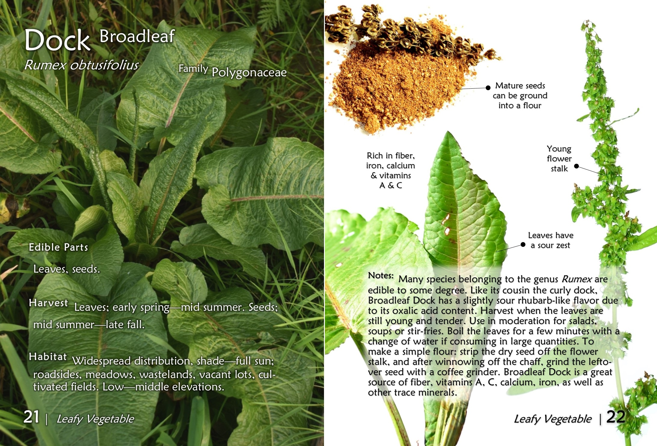 Pocket Guide to Wild Edible Plants – The Northwest Forager™ | 2184 x 1484 jpeg 891kB