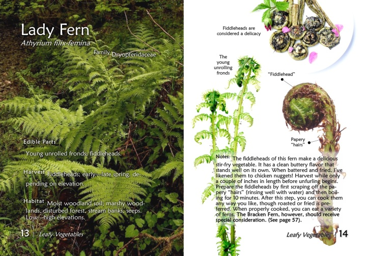 LADY FERN from The Northwest Forager's Pocket Guide to Wild Edible Plants